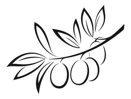 オリーブの枝は、白い背景で隔離の果実と葉のモノクロ黒ピクトグラム アイコン。ベクトル  イラスト・ベクター素材