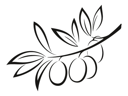 Olive Branch with Berries and Leaves Monochrome Black Pictogram Icon Isolated on White Background. Vector Ilustração