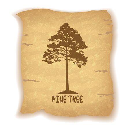 arbol de pino: Silueta del árbol de pino y la inscripción en el fondo del vintage de una sábana vieja de papel. Eps10, contiene las transparencias. Vector