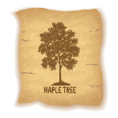 maple tree: Maple Tree Silhouette and the Inscription on the Vintage Background of an Old Sheet of Paper. Eps10, Contains Transparencies. Vector