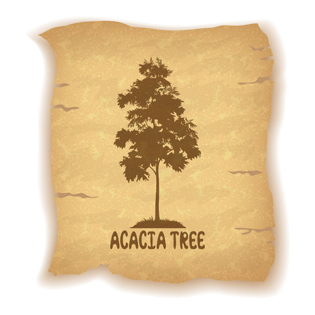 acacia: Acacia Tree Silhouette and the Inscription on the Vintage Background of an Old Sheet of Paper. Eps10, Contains Transparencies. Vector
