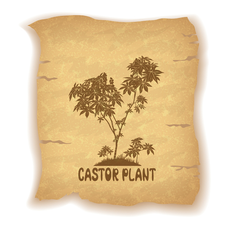 cathartic: Castor Plant Silhouette and the Inscription on the Vintage Background of an Old Sheet of Paper. Eps10, Contains Transparencies. Vector Illustration
