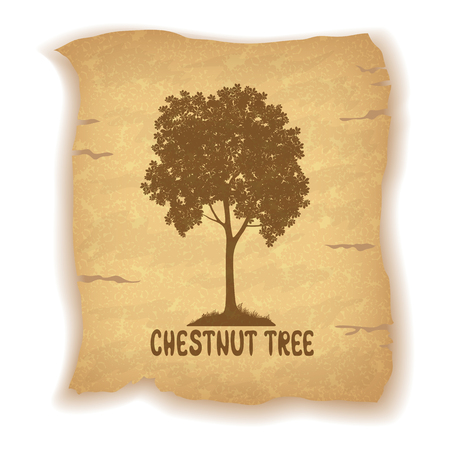 chestnut tree: Chestnut Tree Pictogram Silhouette and the Inscription on the Vintage Background of an Old Sheet of Paper. Eps10, Contains Transparencies. Vector