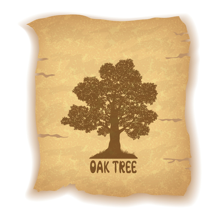 oak: Oak Tree Silhouette and the Inscription on the Vintage Background of an Old Sheet of Paper.