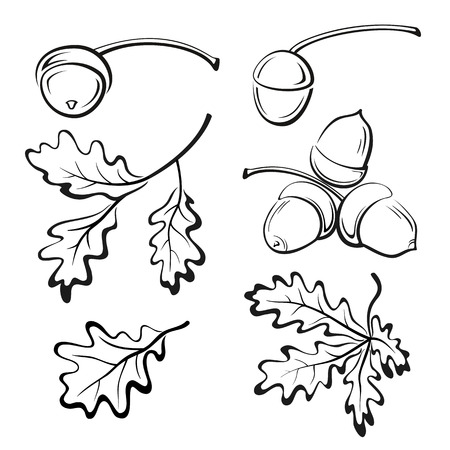 Set Oak Branches with Leaves and Acorns, Black Contour Pictograms Isolated on White Background. Vector