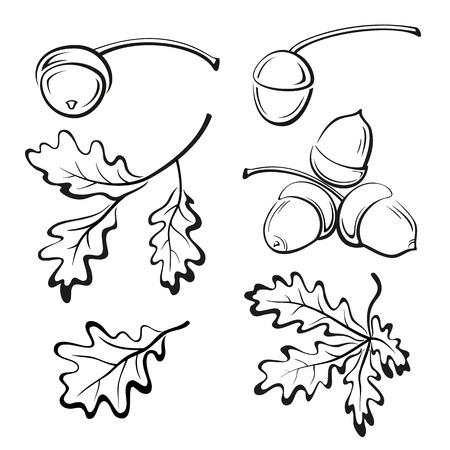Establecer Ramas de roble con hojas y bellotas, Black Contour Pictogramas aislados sobre fondo blanco. Vector