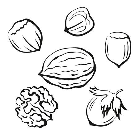 Noten Set, walnoot en Hazel Monochrome Zwarte Pictogrammen iconen op een witte achtergrond. Vector