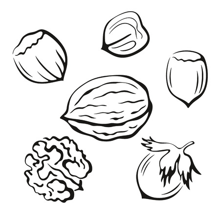 filberts: Nuts Set, Walnut and Hazel Monochrome Black Pictograms Icons Isolated on White Background. Vector Illustration