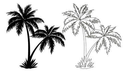 Tropical Palm Trees, Black Silhouettes and Outline Contours Isolated on White Background. Vector