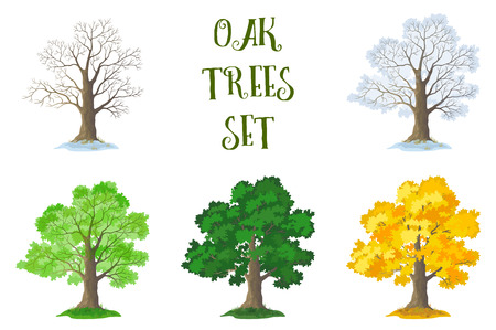 leafless: Set of Oak Trees and Grass, Seasons. Leafless with Twigs and Branches, Snowy Winter, Spring From the Young Leaves, Green Summer and Autumn Yellow Orange, Isolated on White Background. Vector