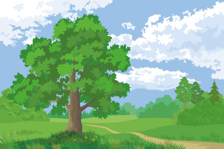 Landscape, Summer Green Forest, Oak Tree and Blue Cloudy Sky. Vector Vector Illustration