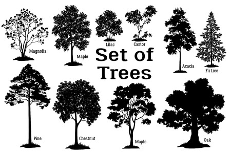 Ustaw odizolowane na białym tle sylwetki wiosną i latem rośliny, drzewa i krzewy, Magnolia, klon, liliowy, Castor, akacja, jodła, sosna, kasztan, klon, dąb i trawy. Wektor Ilustracje wektorowe