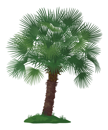 Tropical Palm Tree with Green Leaves and Grass Isolated on White Background