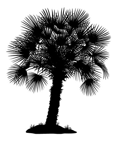 tree grass: Tropical Palm Tree with Leaves and Grass, Black Silhouettes Isolated on White Background.