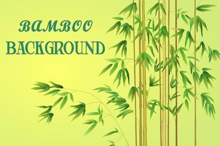 bambou: Bamboo Tiges avec des feuilles vertes sur un fond jaune. Illustration