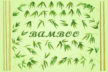 bamboo border: Bamboo Stems with Green Leaves on a Yellow Background. Vector