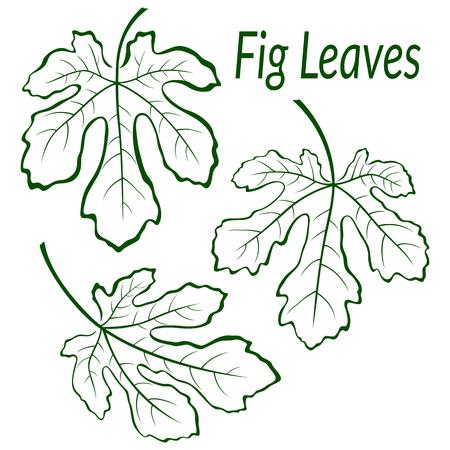 feuille de figuier: Fig Green Tree Leaves Set, Contour Contour Pictogrammes isolé sur fond blanc. Vecteur Illustration