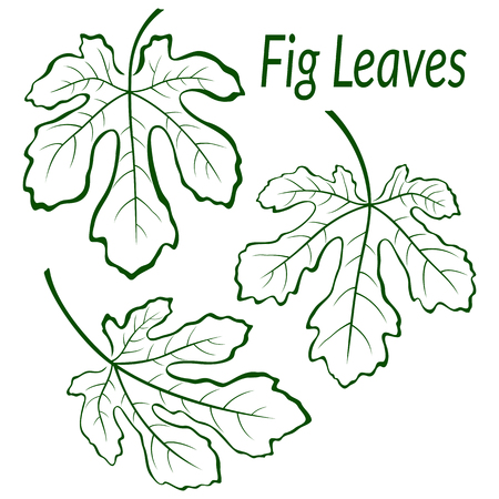 chlorophyll: Fig Tree Green Leaves Set, Outline Contour Pictograms Isolated on White Background. Vector