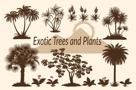 plants and trees: Exotic Plants, Tropical Palm Trees, Flowers and Mountain Landscape with the Rising Sun Silhouettes.
