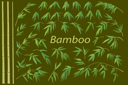 subtropical: Exotic Background, Tropical Bamboo Plants Trunks, Stems, Branches and Green Leaves.