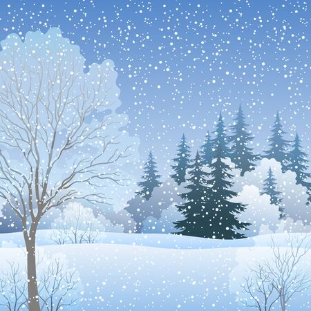 fir trees: Winter Christmas Holiday Woodland Landscape, Forest with Fir and Deciduous Trees and Snow. Eps10, Contains Transparencies. Vector