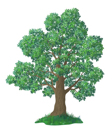 Summer Landscape, Oak Tree with Leaves and Green Grass, Isolated on White Background. Vector