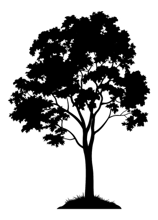 Maple Tree with Leaves and Grass Black Silhouette. Isolated Vector