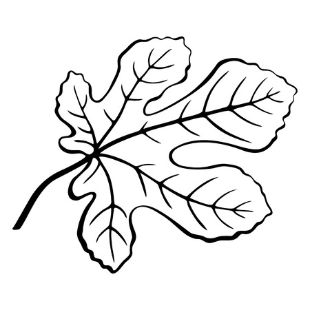Fig Tree Leaf Black Pictogram, Outline Contour Pictogram Isolated on White Background. Vector