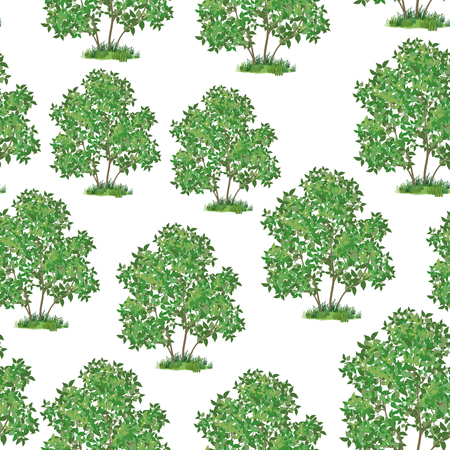 Seamless Pattern, Green Lilac Bush Isolated on Tile White Background.