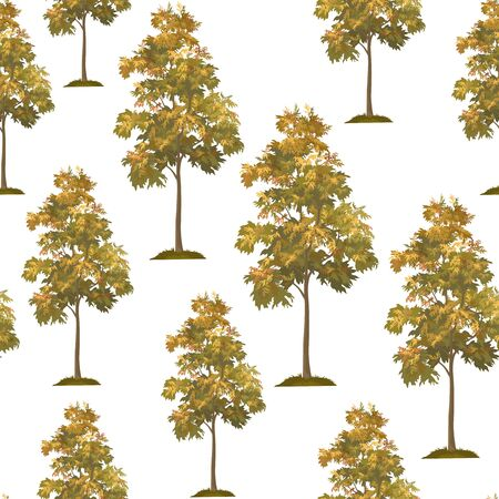 Seamless Pattern, Acacia Tree Isolated on Tile White Background. Vector