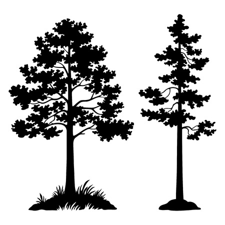 Pine Trees Black Silhouette Isolated on White Background