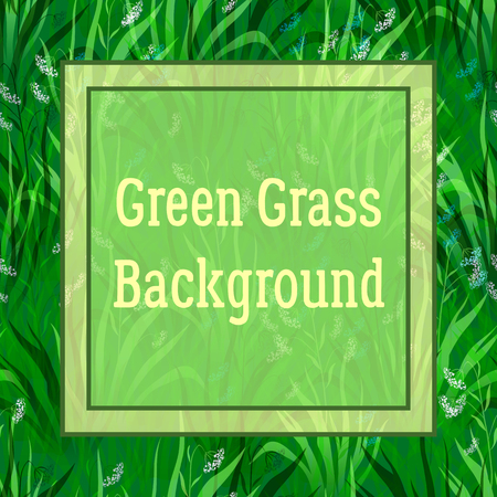 Floral Background, Landscape, Summer or Spring Meadow, Green Grass, White and Blue Flowers and Frame for Your Text. Vector