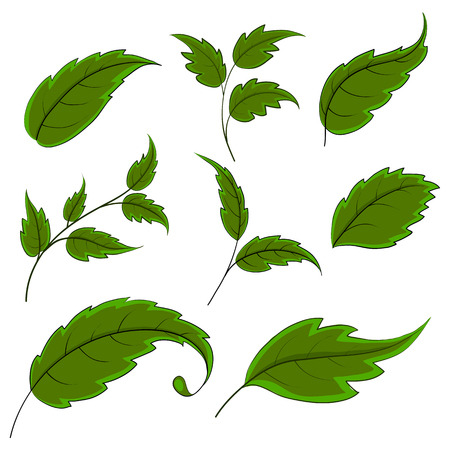 Summer green leaves of various plants on a white background, vector, set