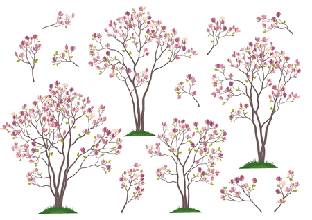 Set Spring Magnolia Trees and Branches with Pink Flowers and Green Leaves Grass Isolated on White Background. Vector Ilustrace