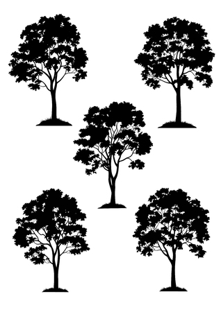 Set Maple Trees on Grass, Black Silhouette Isolated on White Background. Vector