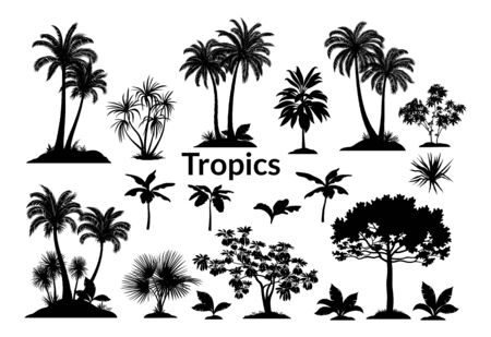 Tropical Plants and Grass Black Silhouettes Isolated on White