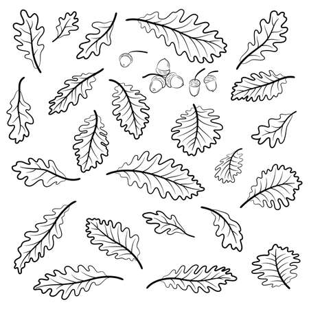 Set Oak Leaves and Acorns, Black Contour Pictograms Isolated on White Background. Vector