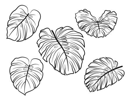 Set Exotic Plant Monstera Leaves, Black Contour Pictograms Isolated on White Background. Vector Illustration