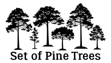 Set Pine Trees Black Silhouettes Isolated on White Background. Vector