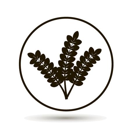 Ears of wheat, cereal. Ear of oats. Rye ears Çizim