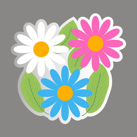 Chamomile - flowers, leaves Vector sticker
