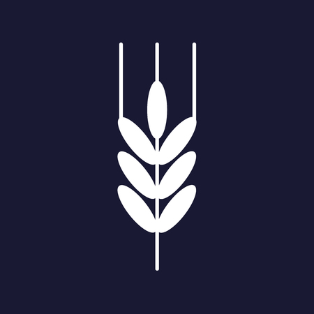 bakery products: Ears of wheat, cereal. Ear of oats. rye ears. Vector icon on dark blue background.