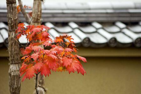 Autumn foliage in Japanese garden, Kyoto, Japan photo