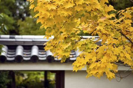 garden lamp: Autumn foliage in Japanese garden, Kyoto, Japan