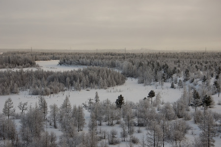 wintriness: Winter landskape with forest in snow in the evening sunset. North
