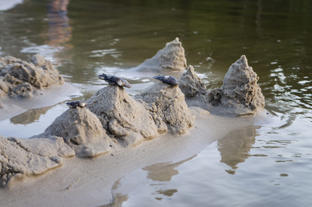 gloaming: Sand castles on the bank of the river. Mild background with pastel colors and reflections in the water Stock Photo