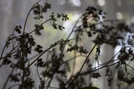 Dry black flowers with lace silhouettes. Simple still life Stok Fotoğraf