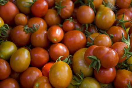 Many red and yellow tomatoes on the wood table. Vegetables. Background Stok Fotoğraf