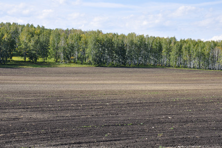Black field with trees far away. Cultivated area. Agriculture. Bright blue sky and green grass Standard-Bild