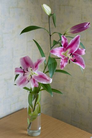 Tender big pink flowers of lily is standing in the glasses vase on the table in the room with light color walls